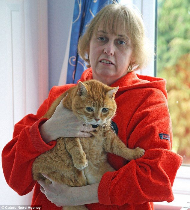 Кошки обнаружили рак у хозяйки