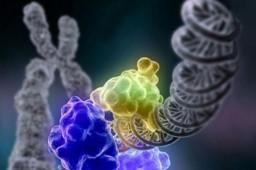 Медики узнали, как рак взламывает ДНК