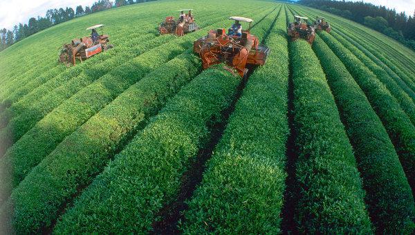 Ученые: чай может снизить риск возникновения рака яичников РИА Новости Украина: http://rian.com.ua/society/20141030/358940268.html