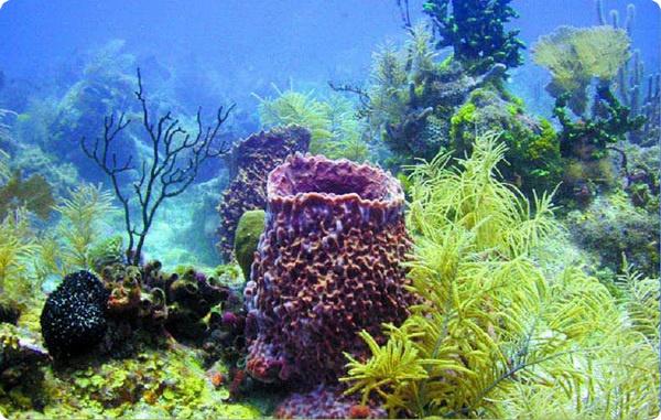 Морские губки против рака груди
