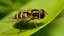 Animals___Insects_Wasp_on_a_leaf_close-up_097912_