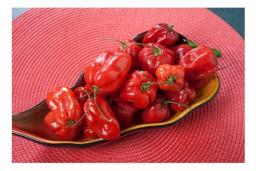 habanero-red-cervene-extremne-palive-chilli-papricky-semena-cili-papricek-10-ks